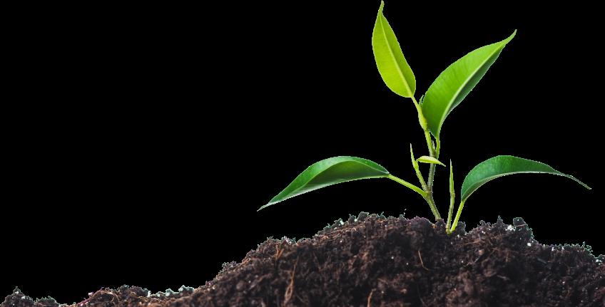 disagro-plant